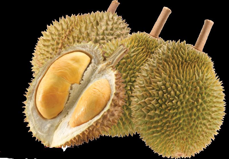19 Manfaat Buah Durian Bagi Tubuh yang Harus Kamu Tahu!